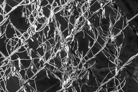 metal mesh: overgrown with metal mesh