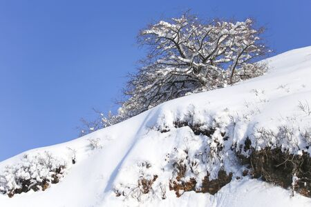 snowscape: tree in the snow against the blue sky
