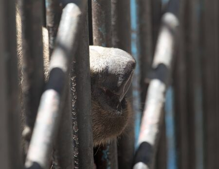 black eye: Bear in a cage in a zoo Stock Photo