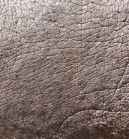 hippopotamus: piel de hipopótamo como fondo Foto de archivo