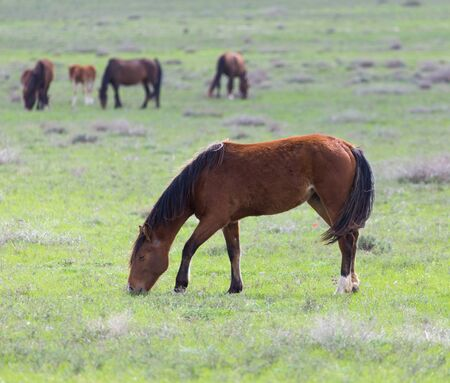 gelding: horse on pasture Stock Photo
