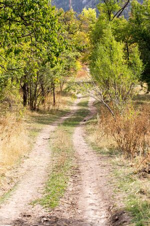wasatch: dirt road in nature