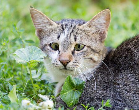 cute bi: cat in the grass on the nature Stock Photo
