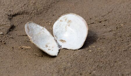 issyk kul: shell in the sand on the lake Stock Photo