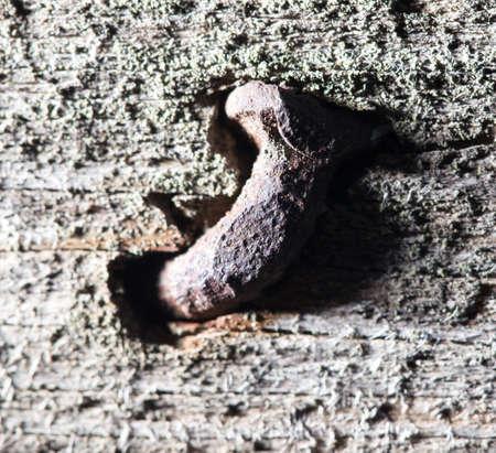 rusty nail: old rusty nail on a blackboard