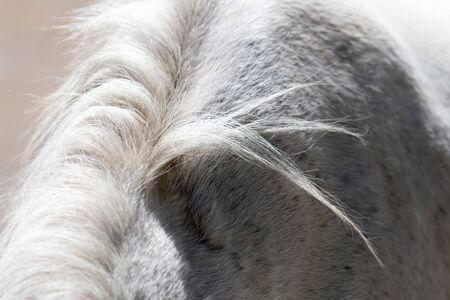 mane: background of the horses mane Stock Photo