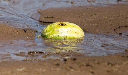 sappy: watermelon in the sand on the lake Stock Photo