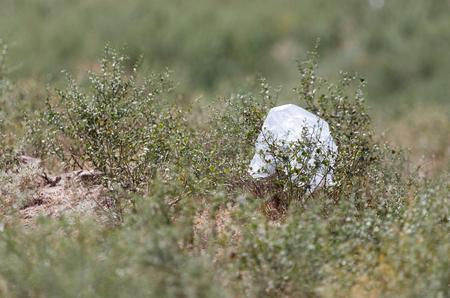 putrefy: Package in nature as garbage