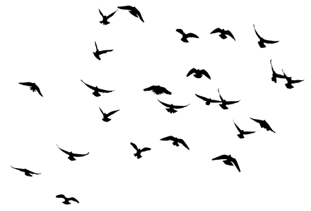 silhouette of a flock of birds on a white background Stock Photo