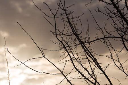 sunup: bare tree branches at dawn sun
