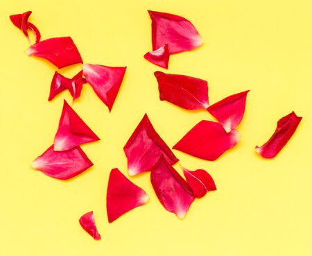 rose petals: rose petals on yellow background