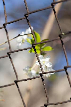 metal mesh: flowers in metal mesh fence