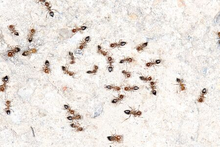 collectives: ants on the wall. close-up
