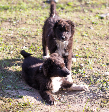 sniff: two black puppy on nature