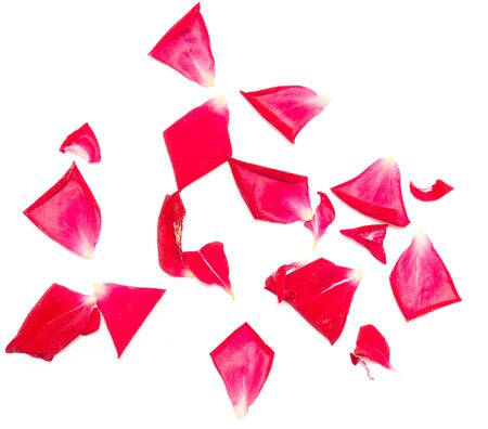 love explode: rose petals on white background
