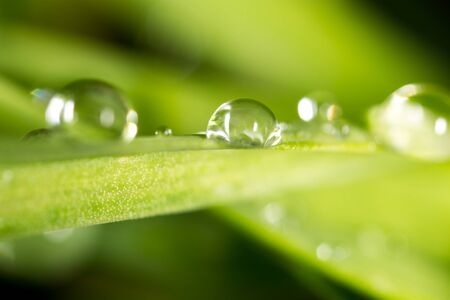 Water drops on the fresh green shoot. Super Macro Stock Photo