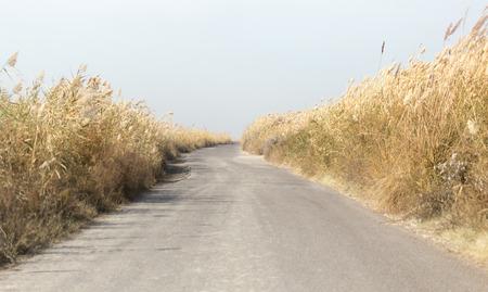 ance: strada asfaltata tra le canne