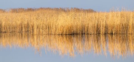 reeds: canne sul lago All'aperto