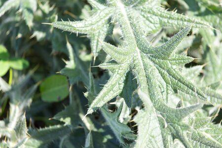 prickly: prickly plant Stock Photo