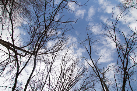 deciduous woodland: bare tree branches against the blue sky Stock Photo