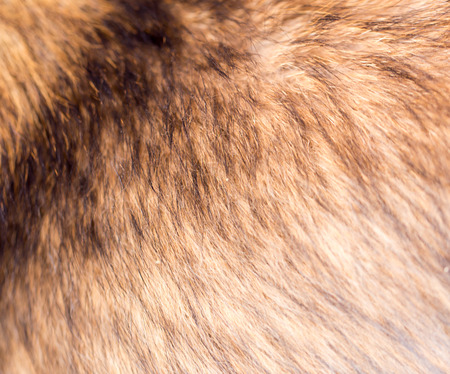 hairy back: the dogs fur as background