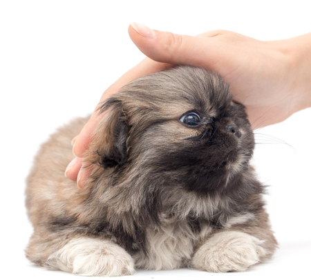 humane: Puppy in hand on a white background