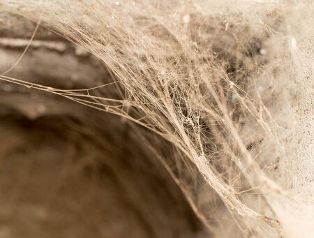 lightbeam: old web as background Stock Photo