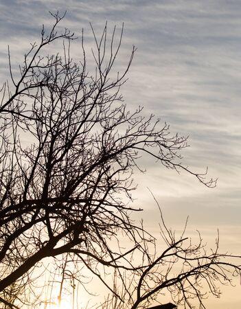 sunup: bare branches of a tree at sunrise sun