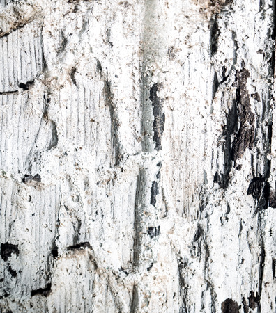 burnt: background of burnt wood