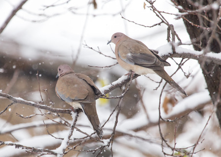 precipitation: bird dove winter nature
