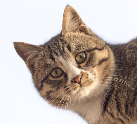 frisky: portrait of a cat in nature
