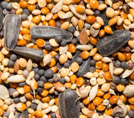 feed up: background of birdseed. close