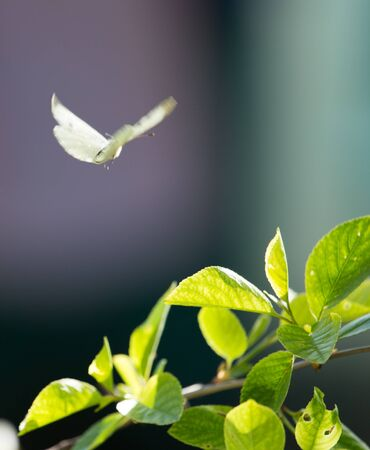 feelers: butterfly in nature Stock Photo