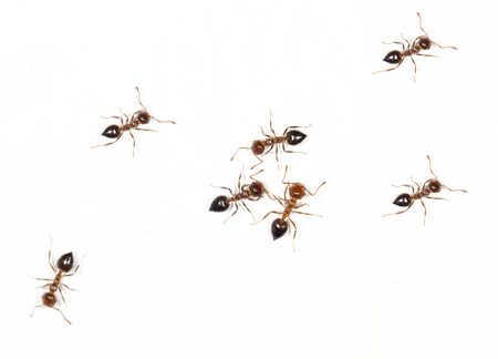 similitude: ants on a white wall. macro