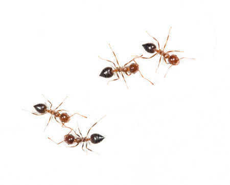 similarity: ants on a white wall. macro