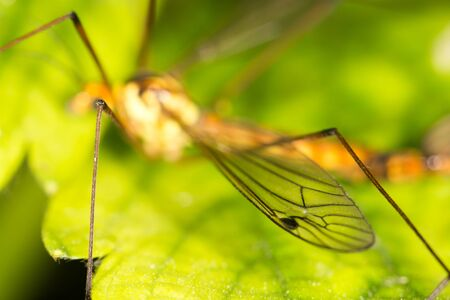 nuisance: the wing of a mosquito. close