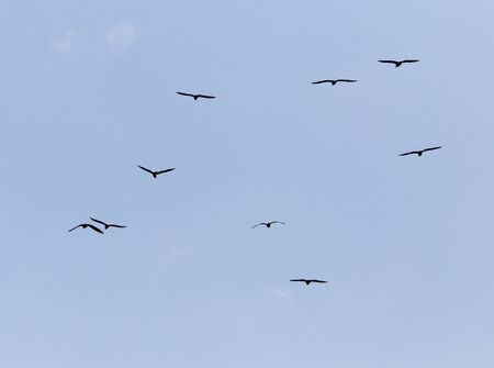 pursue: A flock of seagulls in the sky