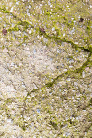 cracked concrete: Moss on the cracked concrete Stock Photo