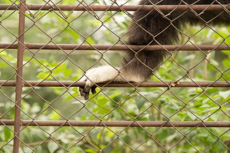 incarcerated: paw monkey in a cage at the zoo