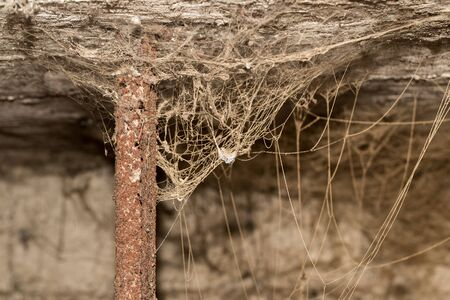 arachnids: old web as background Stock Photo