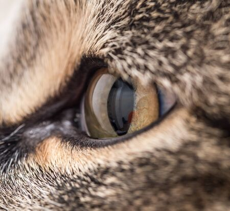 intent: Extreme close-up of green cats eye. Stock Photo