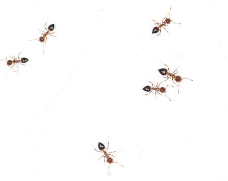 eight legs: ants on a white wall