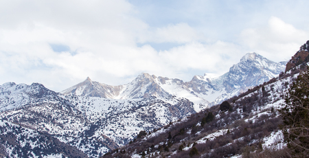 fur trees: snow-capped mountains of the Tian Shan in winter Stock Photo