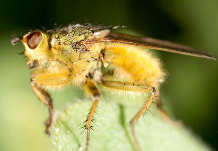 wet flies: It flies in the grass on the nature. macro