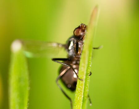 macro nature: It flies in the grass on the nature. macro