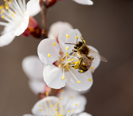stamen wasp: bee on a flower in the nature. macro