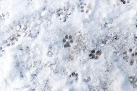 huellas de perro: Huellas de perro en la nieve