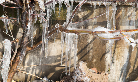 icicles: icicles on the branches of a tree Stock Photo