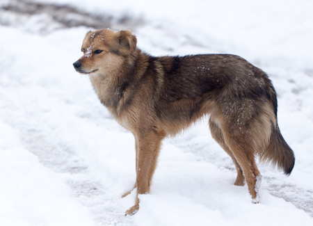 appearance: dog portrait outdoors in winter Stock Photo