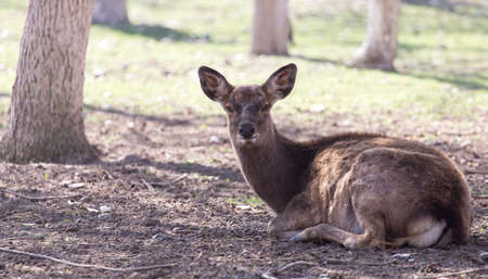 young female deer in a park on the nature Stock Photo
